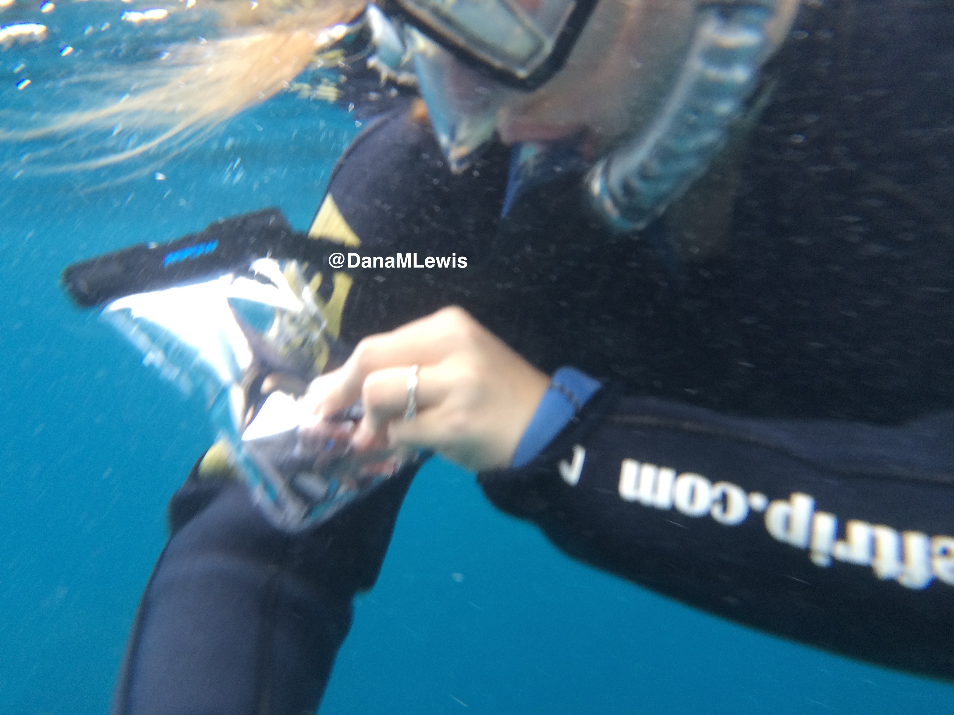 dry training for freediving analysis and management of physical preparation